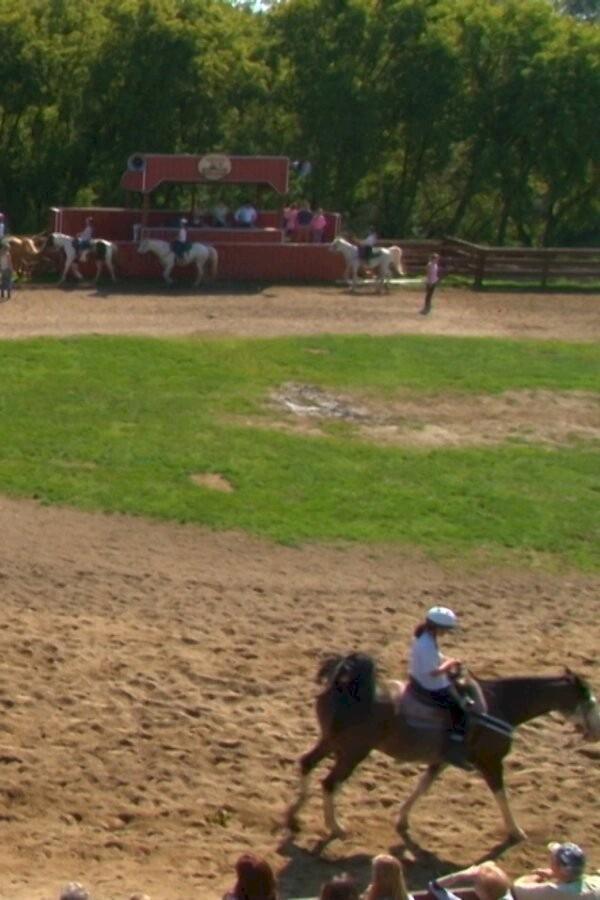 De Paardenzomer