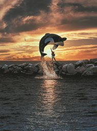Free Willy image
