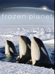 Frozen Planet image