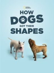 How Dogs Got Their Shapes image