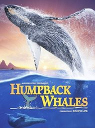 Humpback Whales image