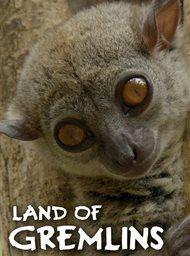 Land of Gremlins image