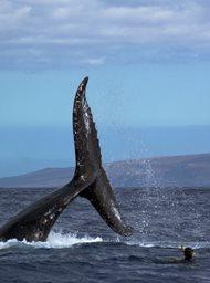 Ocean Giants image