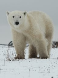 Operation Arctic image
