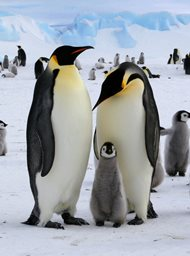 Pinguïns undercover