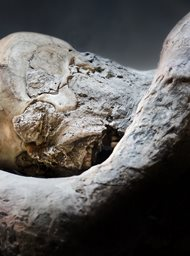 Pompeii: The Secrets of the Petrified Bodies image