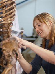 Prehistoric Autopsy image