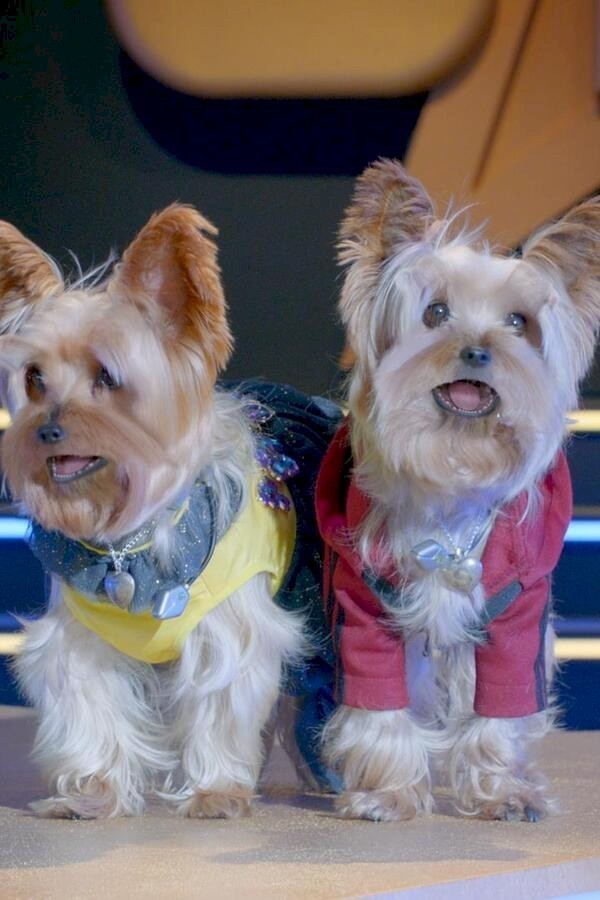 Pup Star: Samen Staan We Sterker