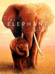 The elephant queen image