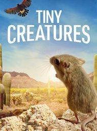 Tiny Creatures image
