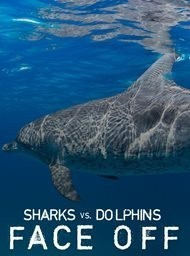 Sharks vs dolphins: Face off