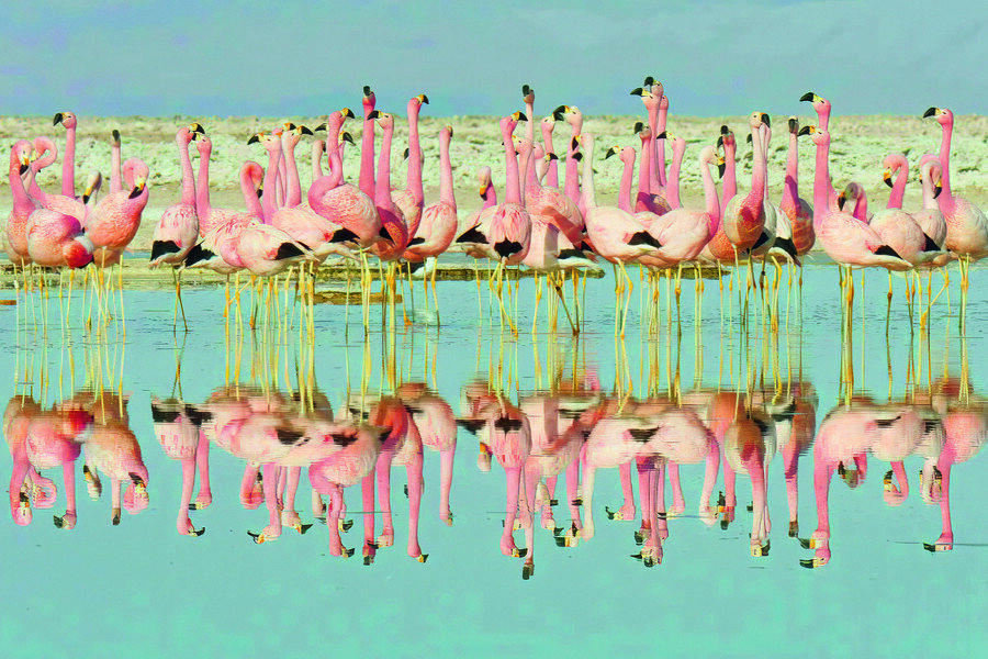 Life in Colour with David Attenborough image
