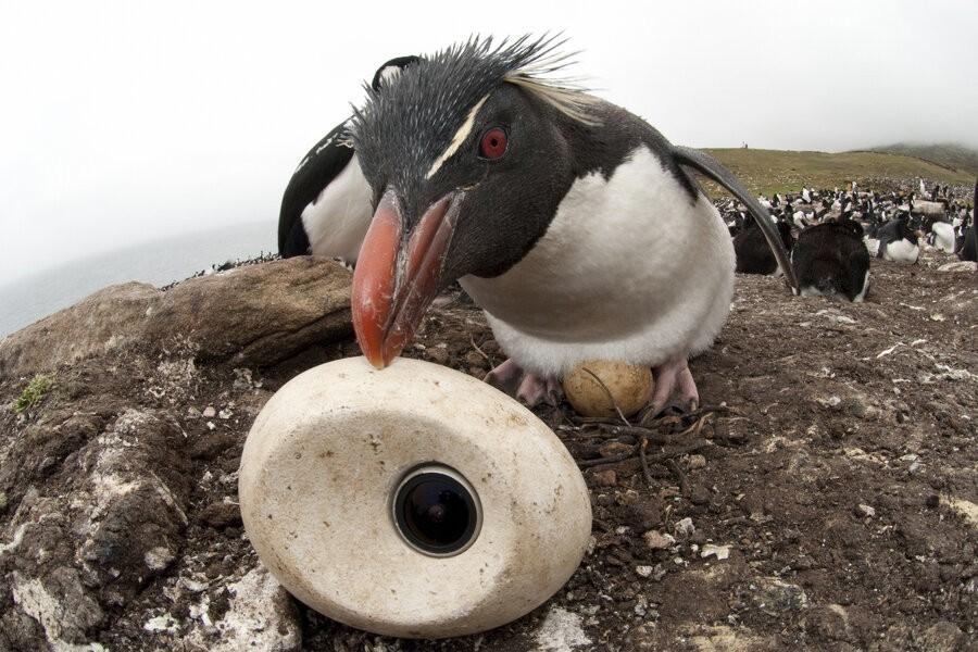 Pinguïns undercover image