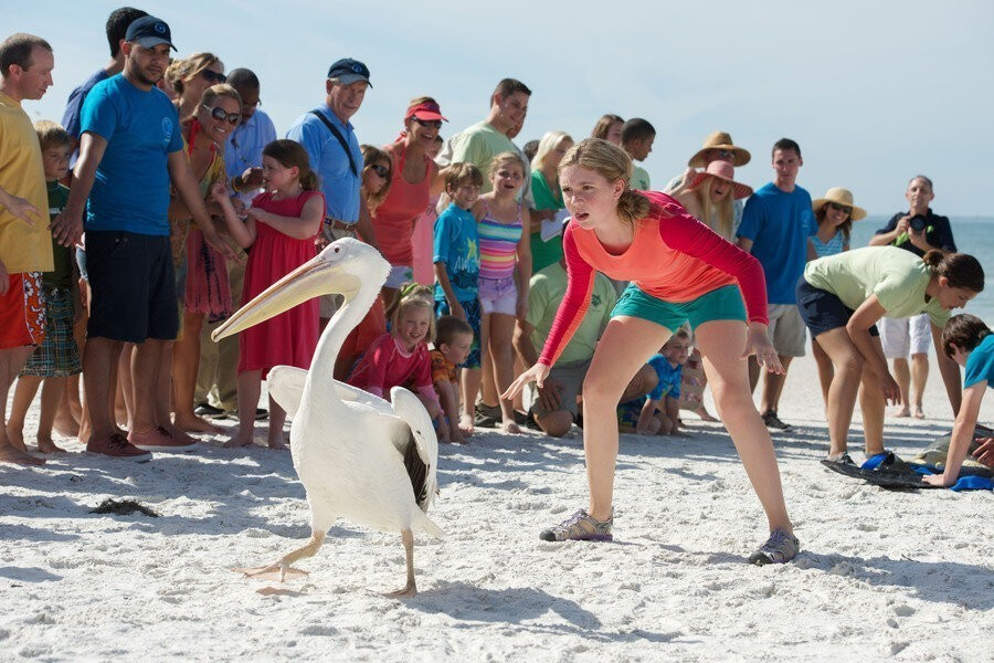 Dolphin Tale 2 image