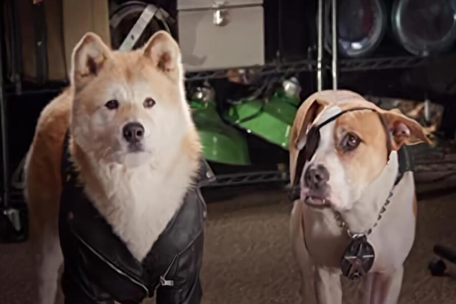 Pup Star: Samen Staan We Sterker image