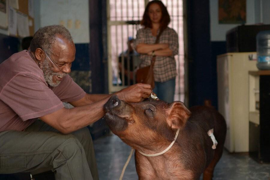 Mr. Pig image