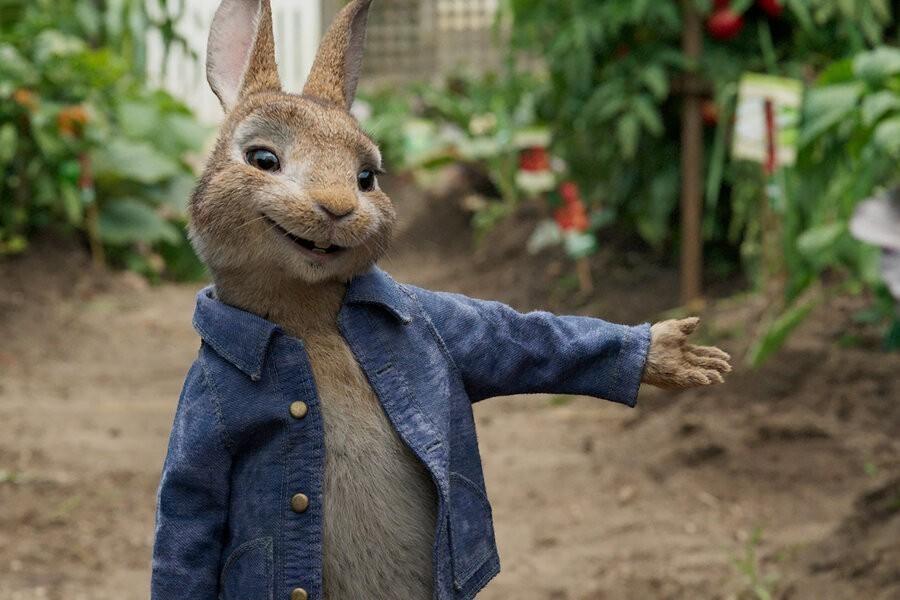 Peter Rabbit image