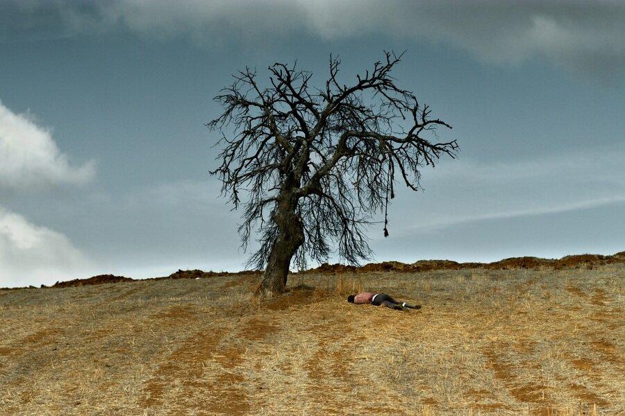 The Wild Pear Tree image