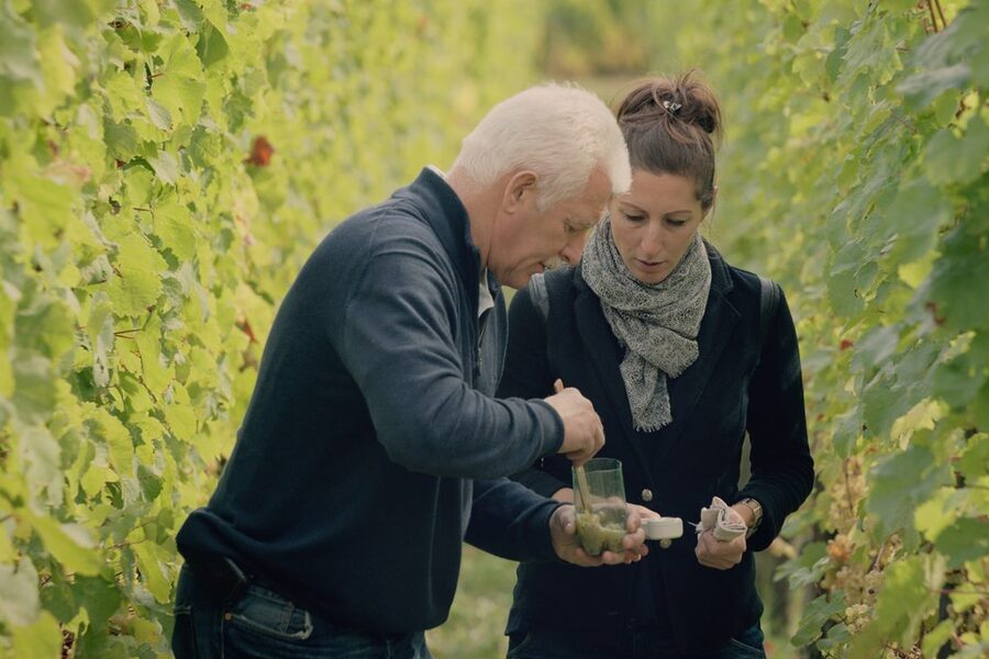 Wine Masters: Alsace image