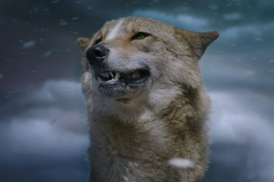 The Last Wolf image