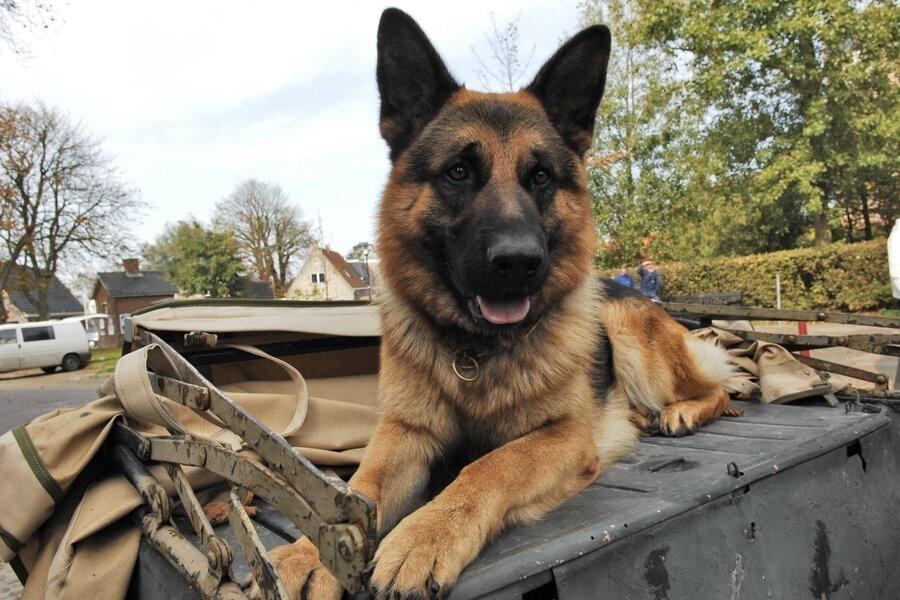 Snuf, de hond image