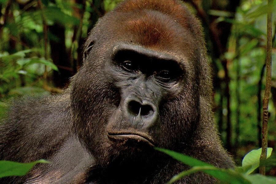 Wild Congo image