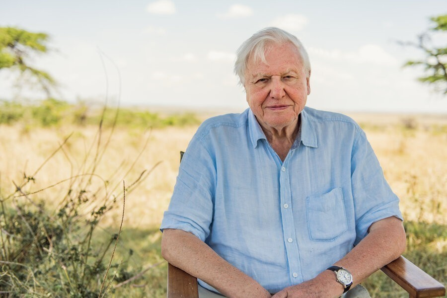 David Attenborough: A Life on Our Planet image