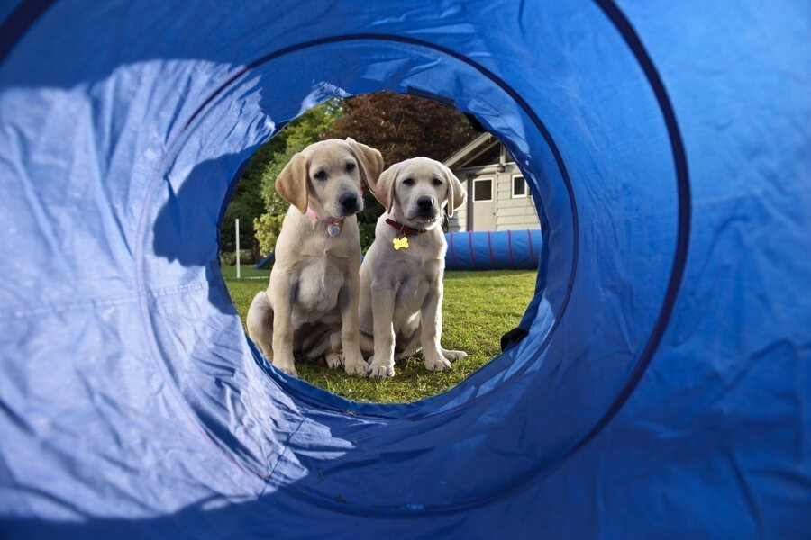 Marley & Me: The Puppy Years image