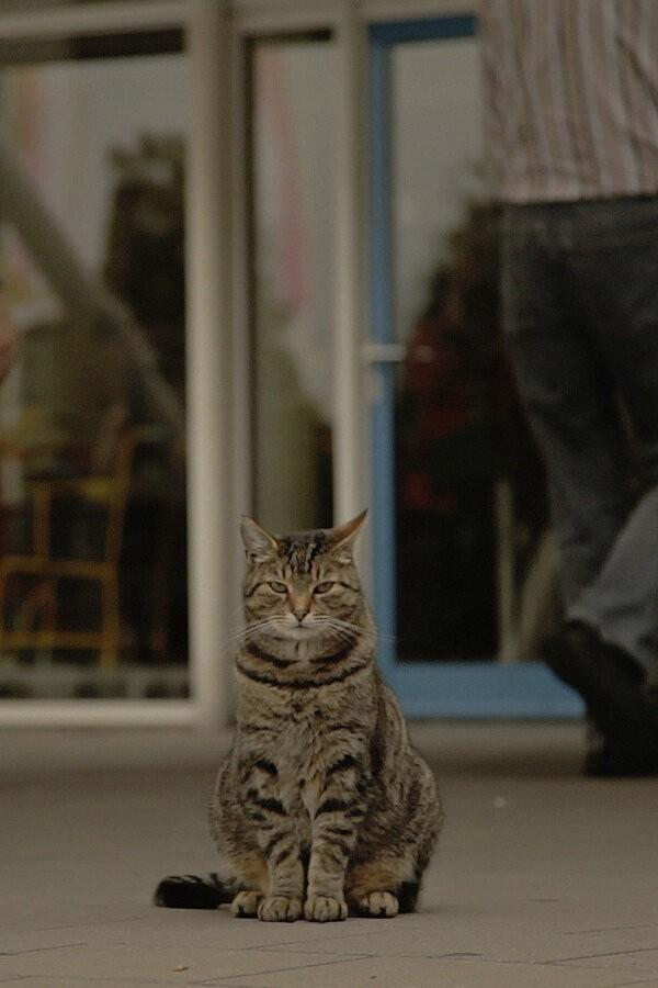 Wat de kat ziet image