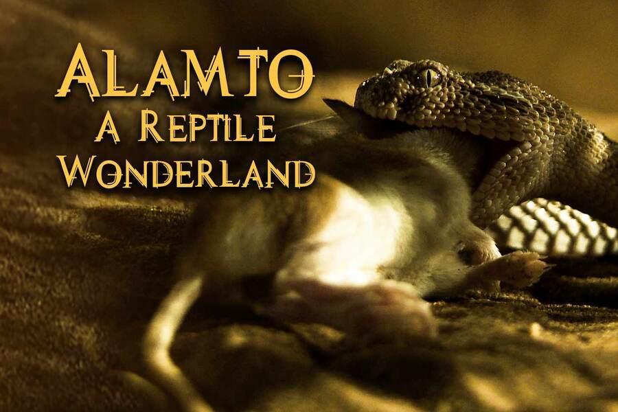 Alamto: A Reptile Wonderland image