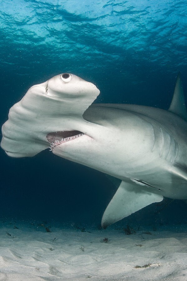 Cuba's Secret Shark Layer image
