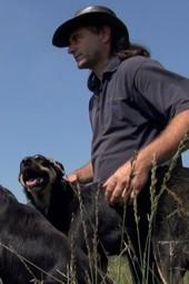 De stress van de herder