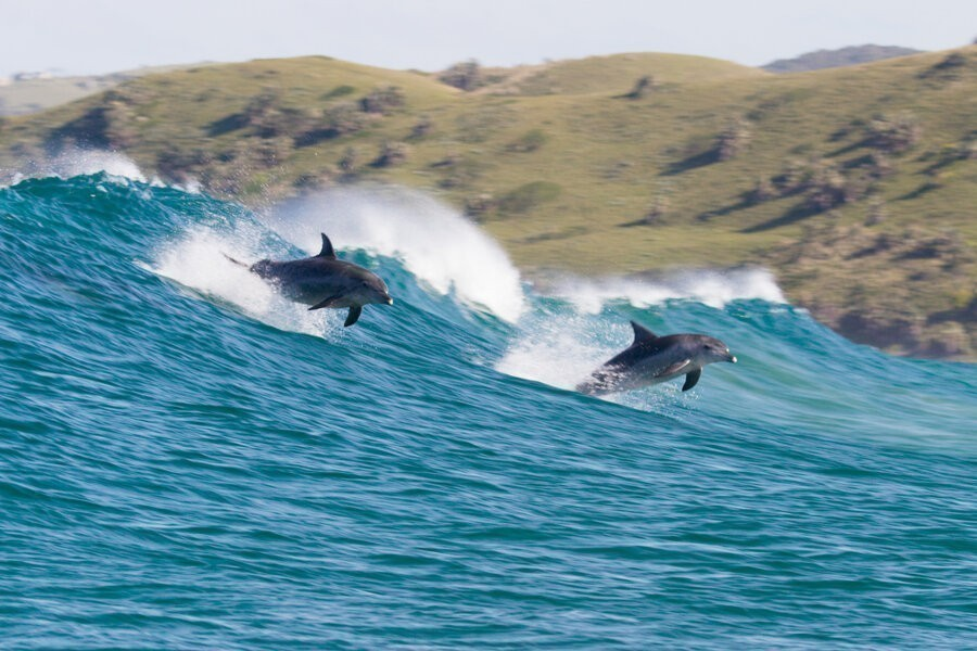 Dolfijnen Rif image