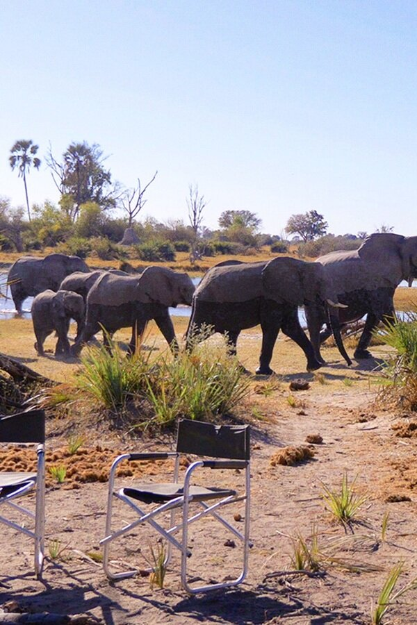 In the Footsteps of Elephant image