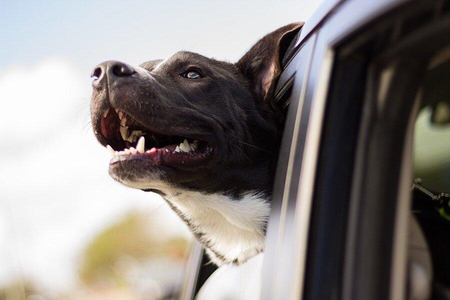 Wonderful World Of Puppies image
