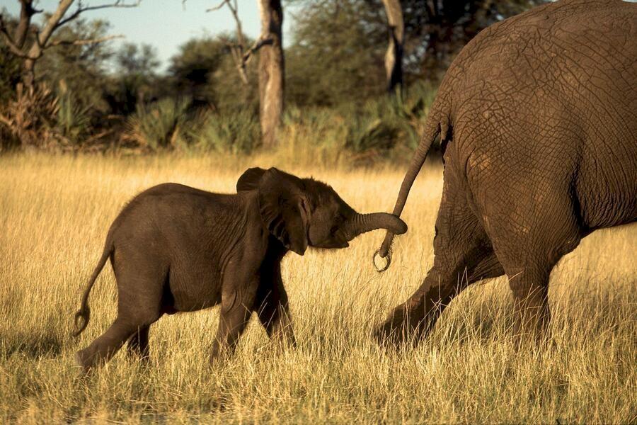 Whispers: An Elephant's Tale image