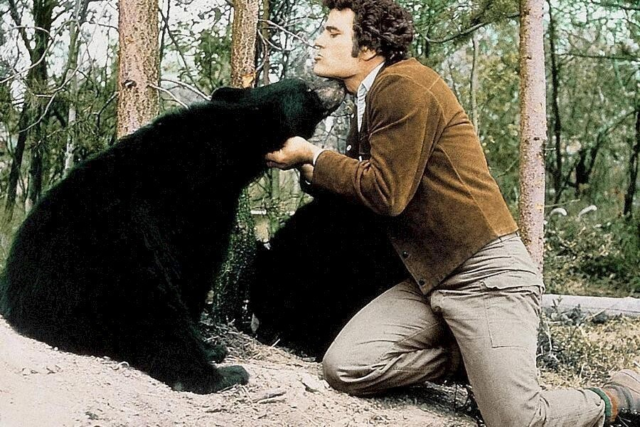 The Bears and I image
