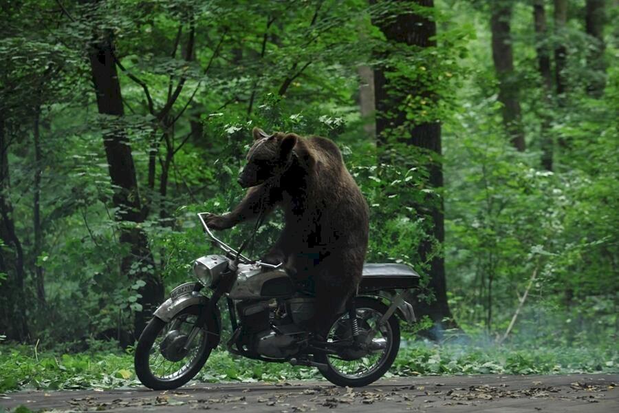 Ursul image