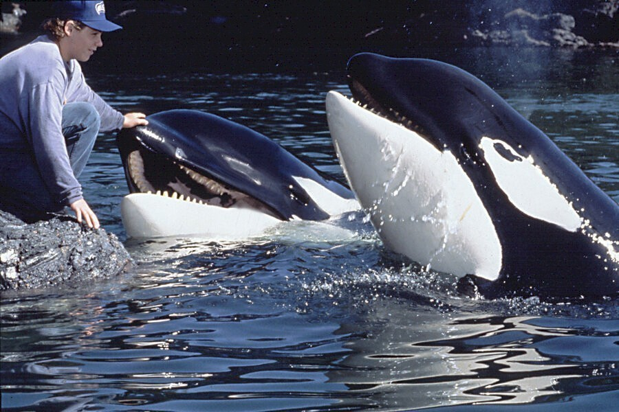 Free Willy 3: The Rescue image