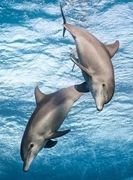 Dolfijnen Rif