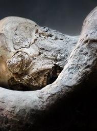 Pompeii: The Secrets of the Petrified Bodies